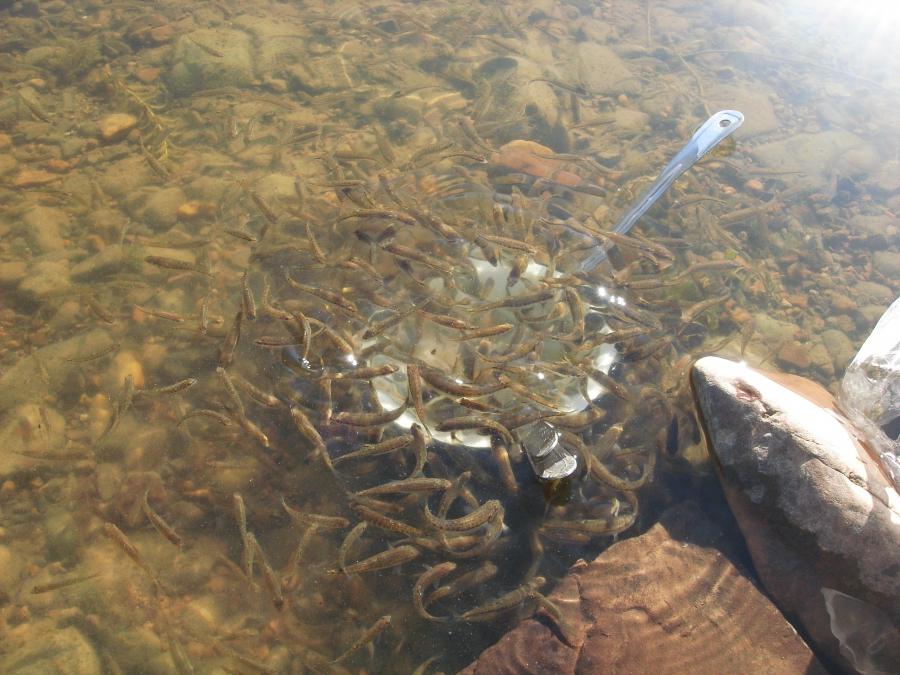 река чусовая урал рыбалка