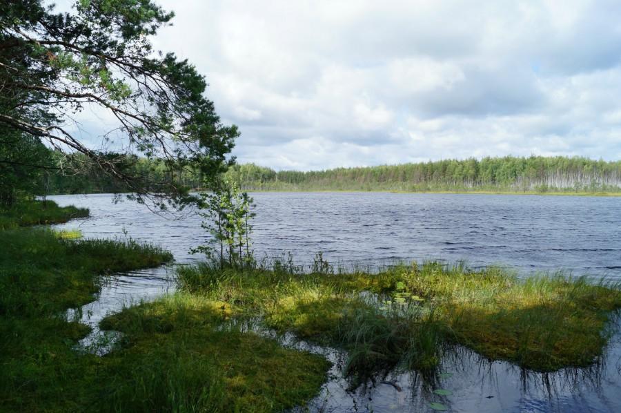 Озеро Большое Мартышево