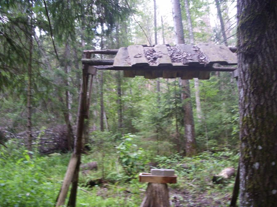 Лосиная кормушка с лизунцом около озера Глубокое (Павловский район)