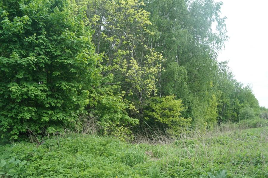 Все, что осталось от прудов. Их было пять, они высохли и заросли лесом. Фото 2