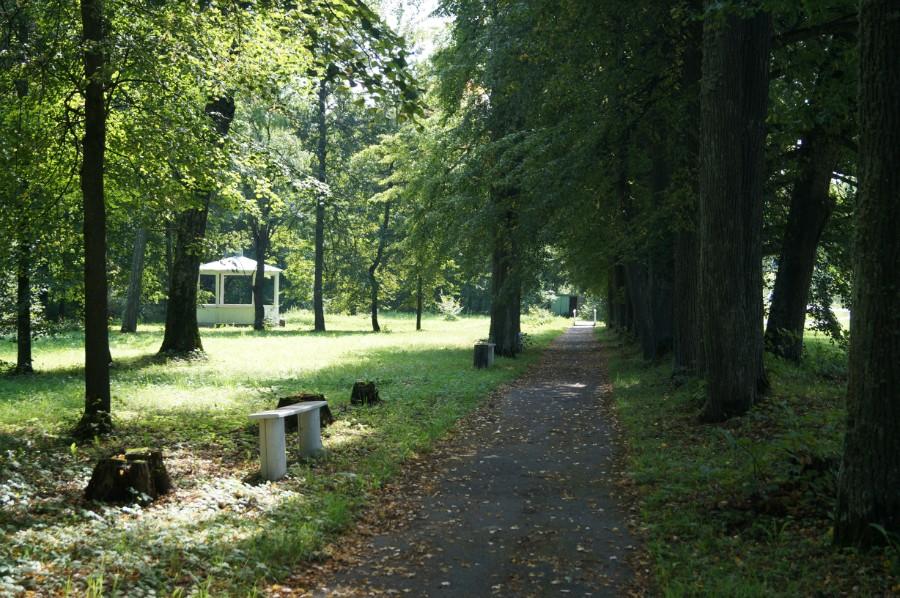 Аллея в приусадебном парке, фото 2