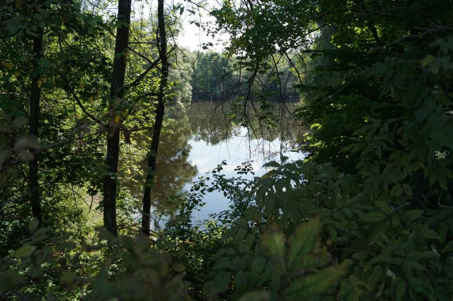 Нижний пруд в приусадебном парке