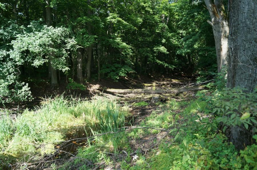 Верхний заброшенный пруд