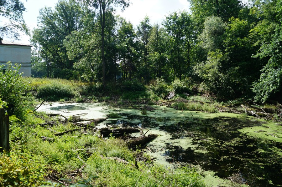 Верхний заброшенный пруд, фото 2