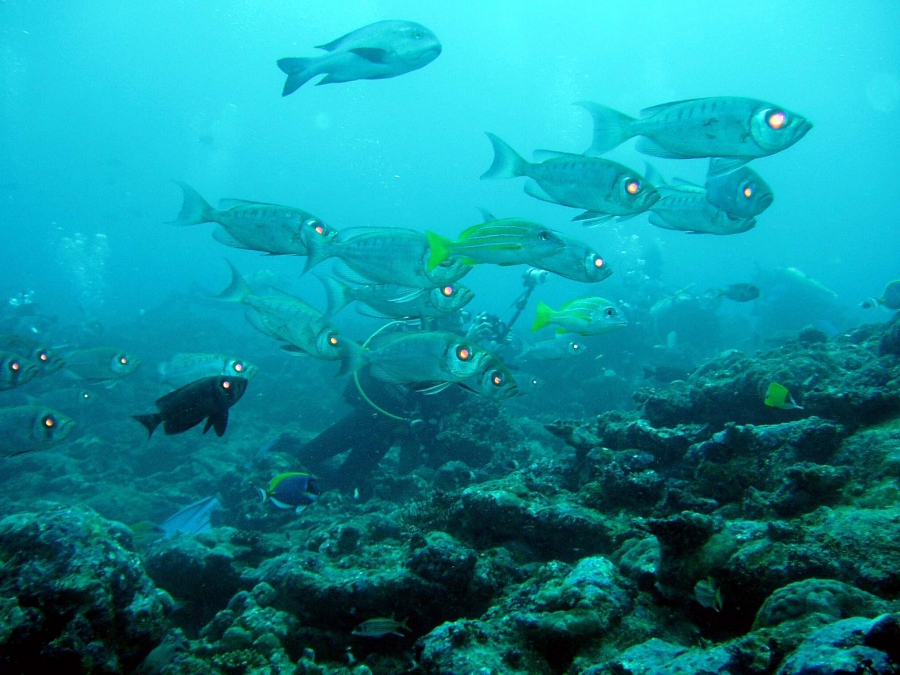 Подводный мир индийского океана фото