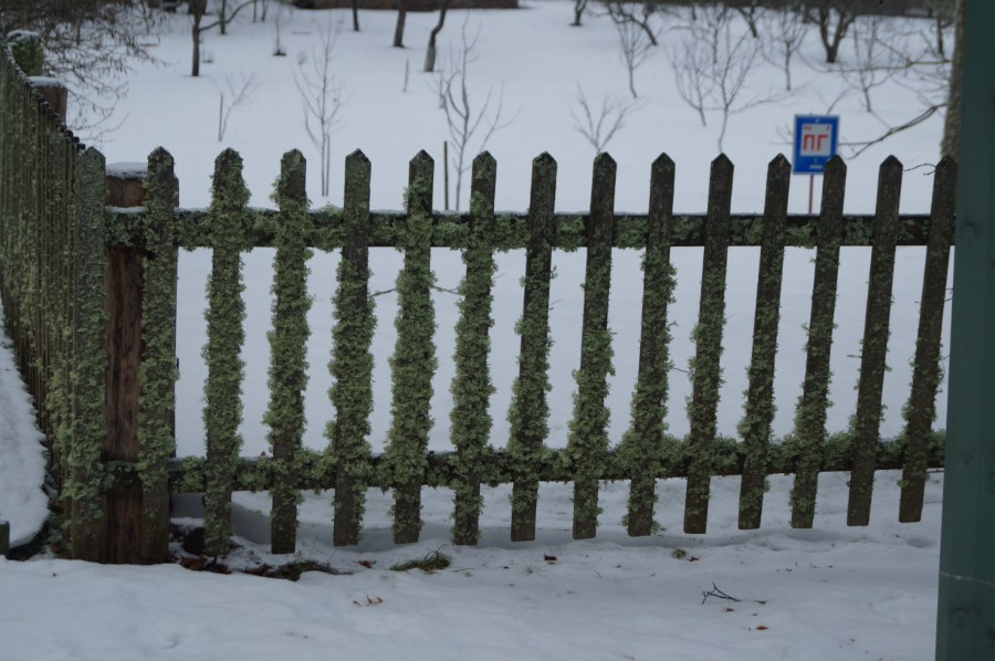 Михайловское. Забор зарос мхом..