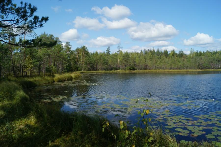 Озеро Волково, Навашинский район. Живописное озерцо в окружении клюквенного болота. Фото 3