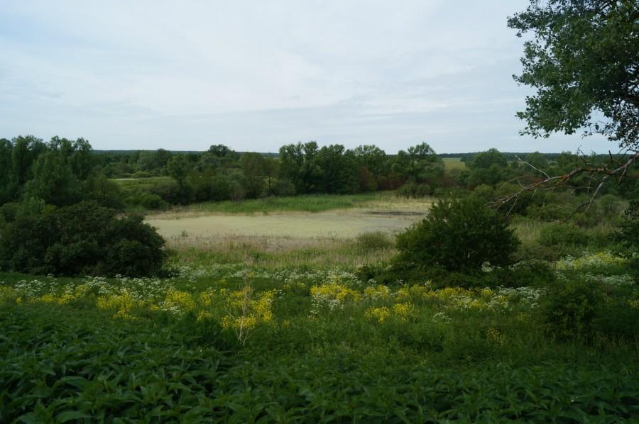 Бывший некогда чистый Ключищенский пруд зарастает крапивой и ряской