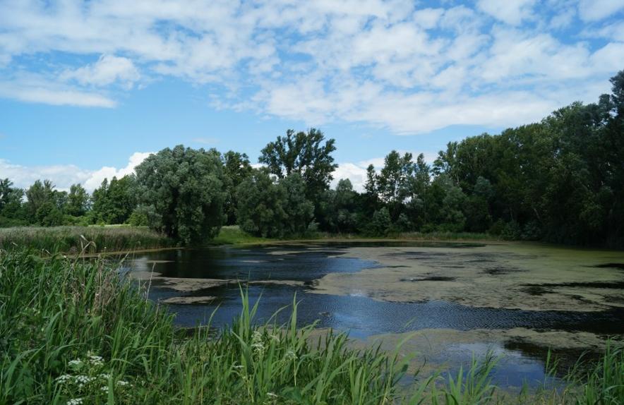 Остатки Демидовского парка в Покров-Майдане фото 2