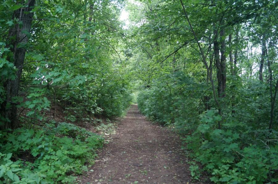 Спускающаяся дорога от замка Оболенских в пойму реки Урга