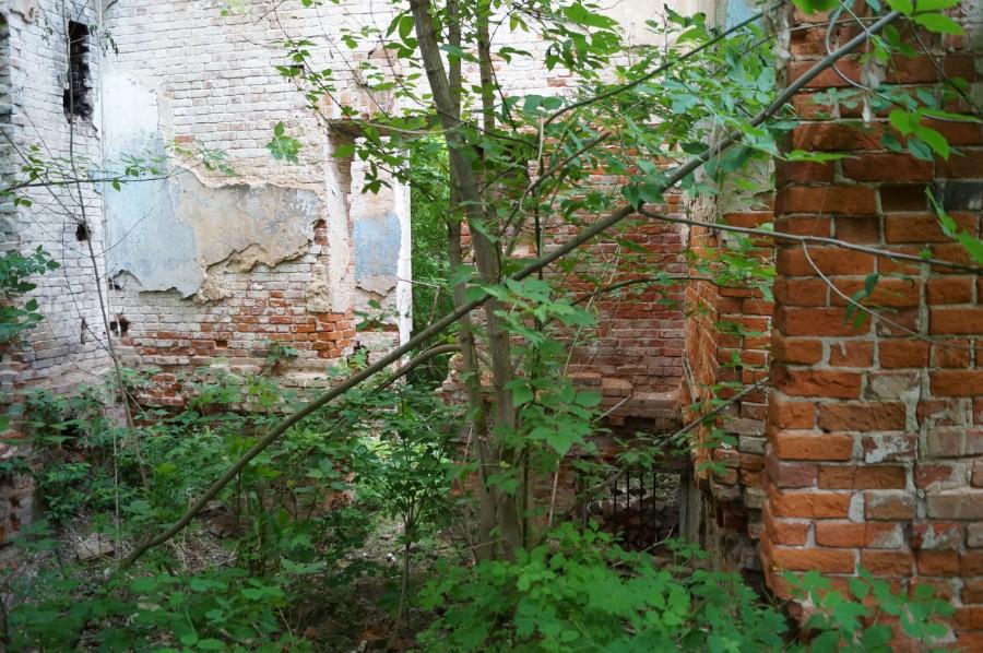 В руинах замка Оболенских фото 4