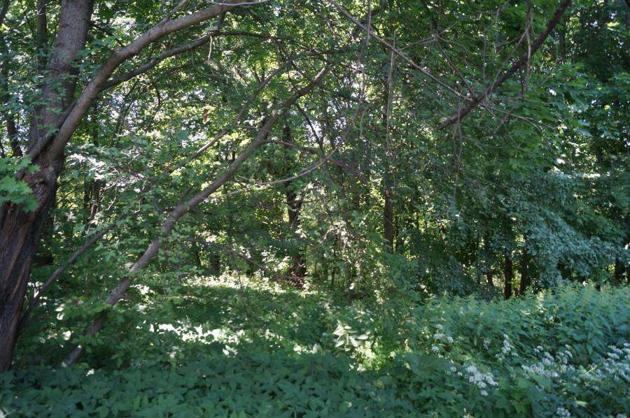 Заросший и переродившийся парк усадьбы Орловых-Давыдовых в Симбилее