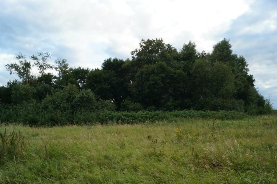 Остатки переродившегося парка Приклонских в урочище Федотово