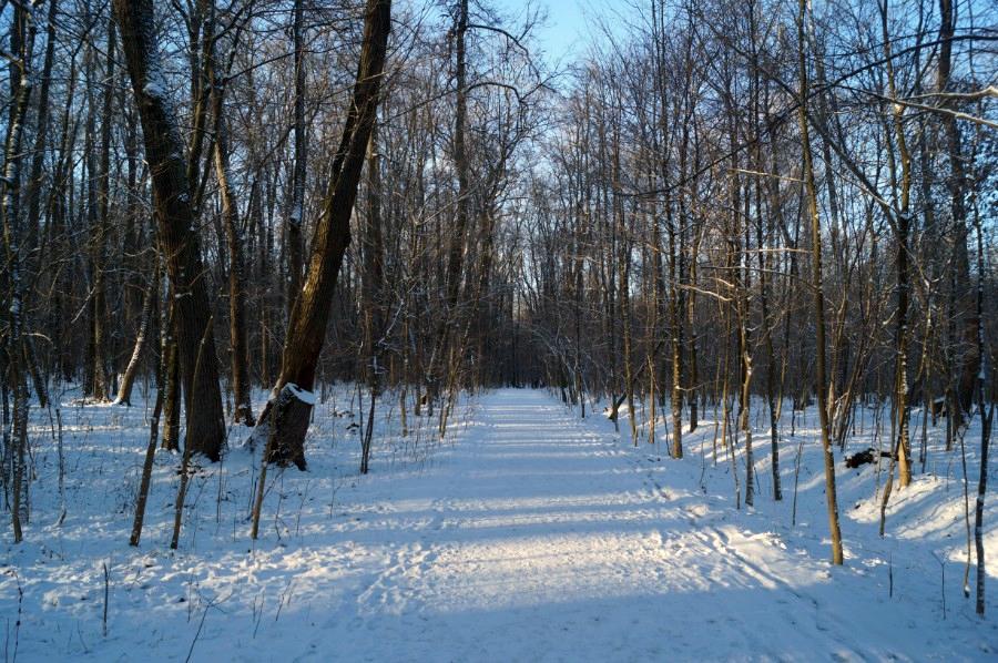 Дорога к могиле Л.Н. Толстого