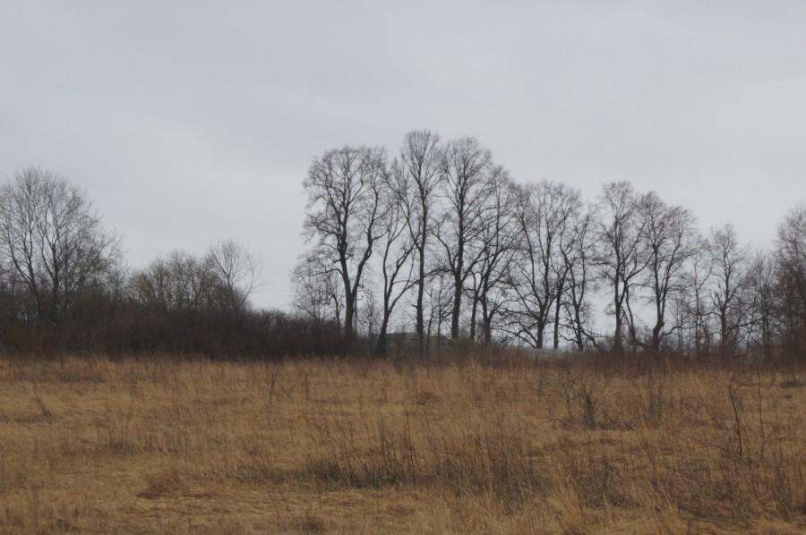 Остатки парка бывшей усадьбы генерала Скалона в Игнатово