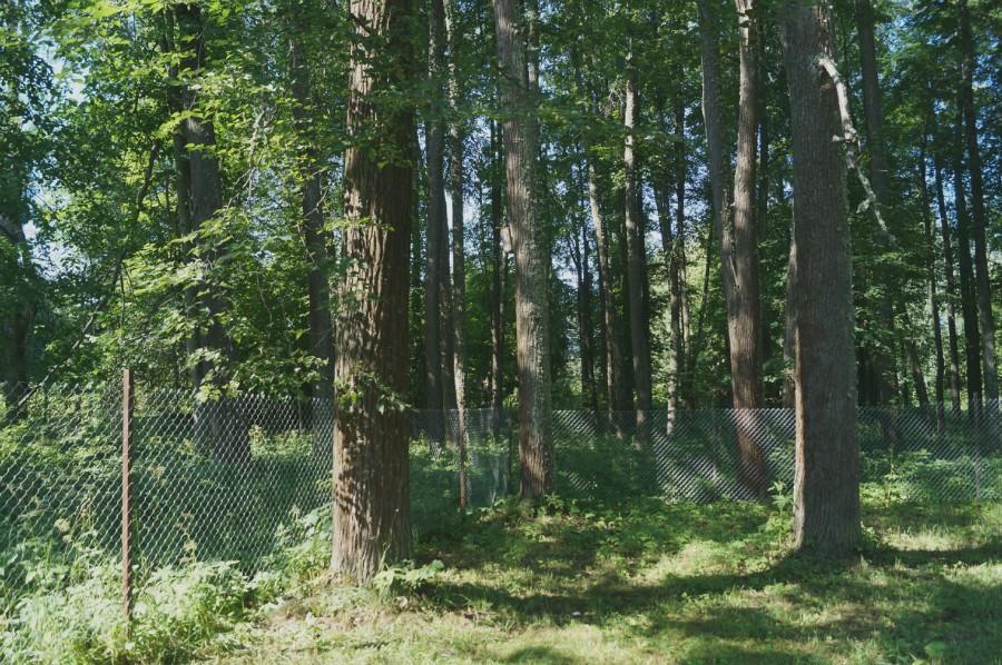 Остатка парка усадьбы Базилевских