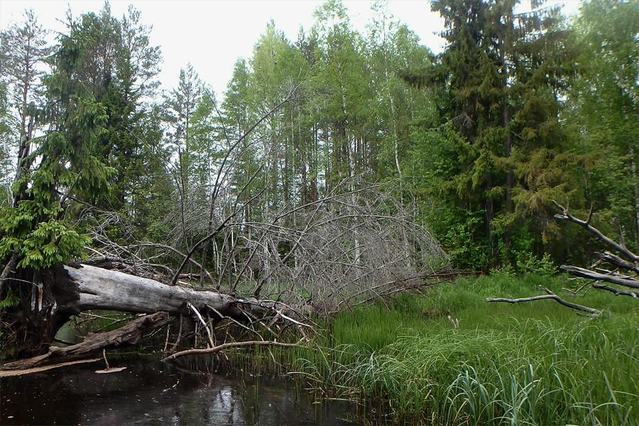 Красиво упала елочка