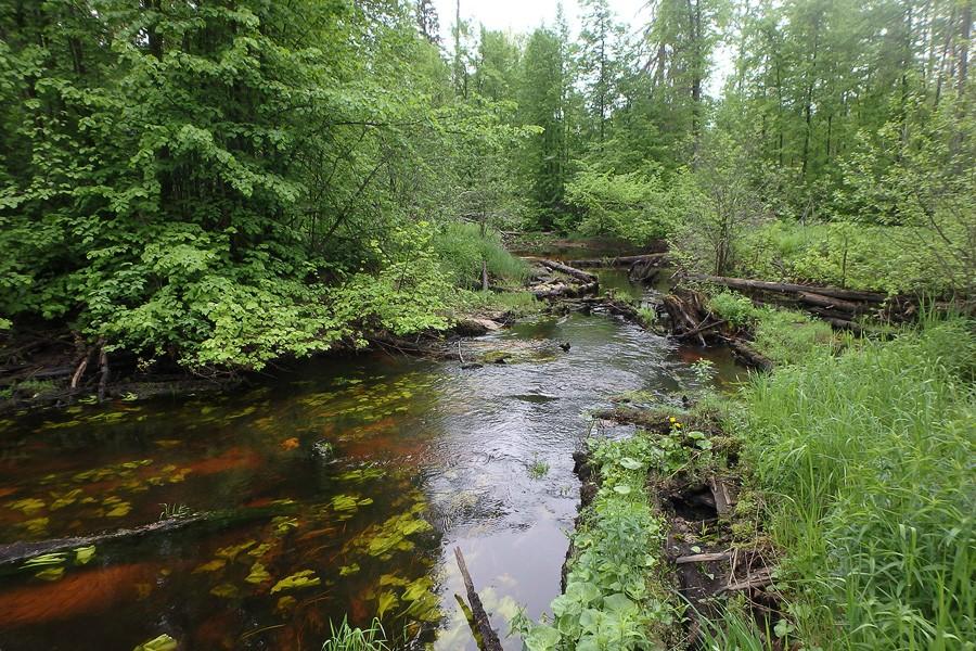 Воду в речке окончательно выключили