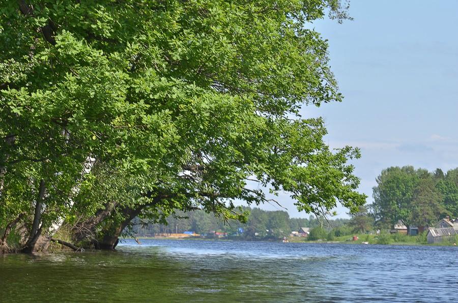 Вид на Любимовку из-под нависающего над левой протокой дуба