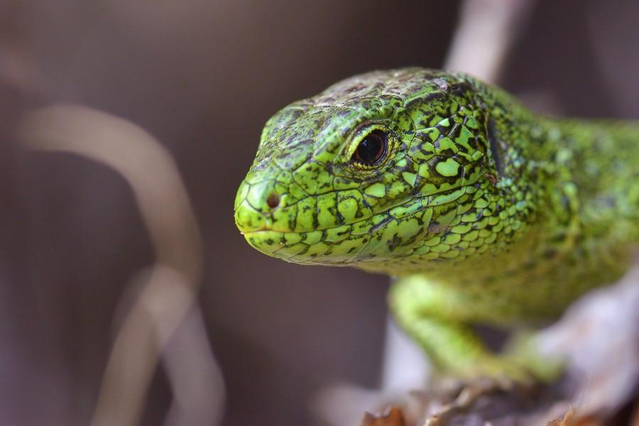 Зелёный гость