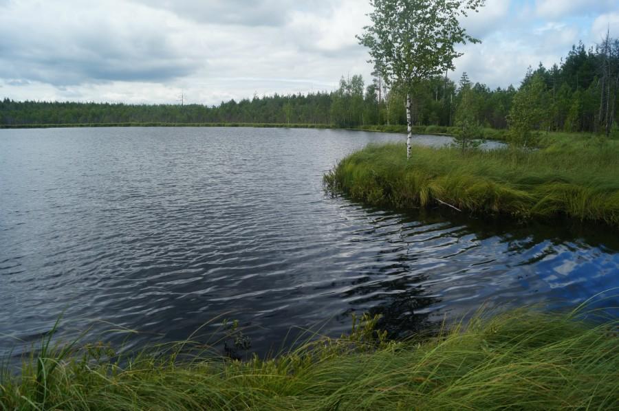 Живописные берега озерца Глубокое (Культюшки)