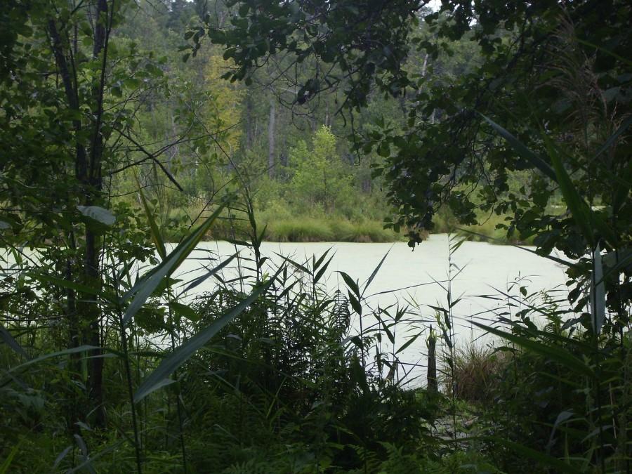 Озеро глубокое (Павловский район)