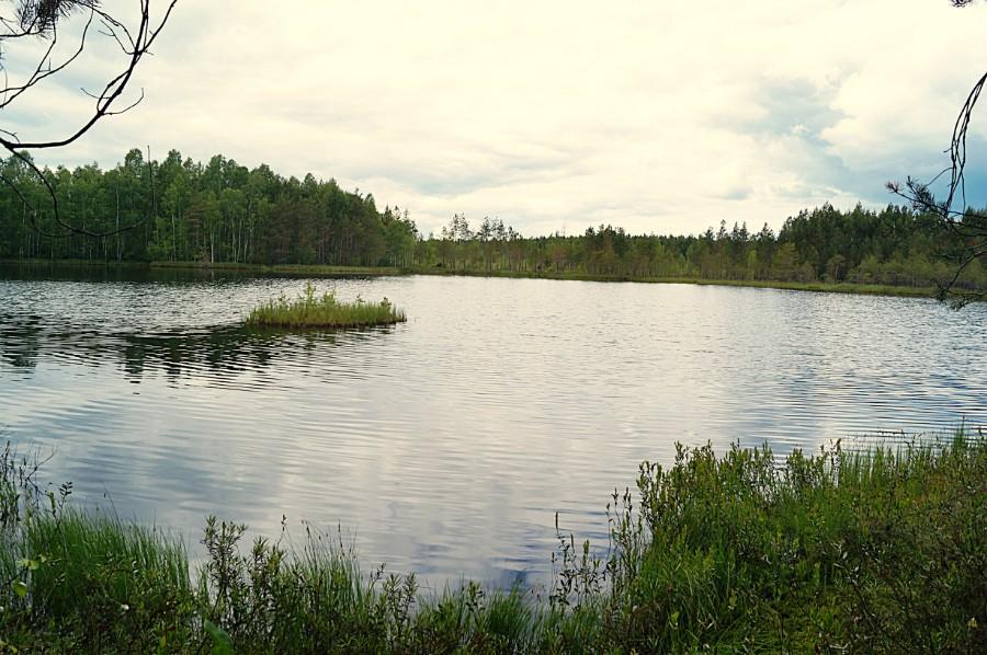 Маленькое, но очень живописное озеро Пурешево (Литняковское)