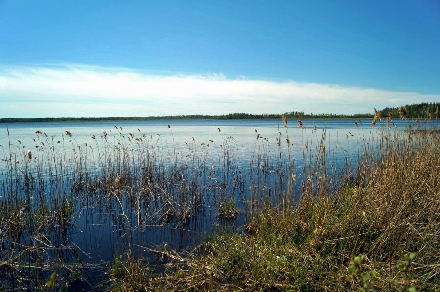 На берегу озера Пырское