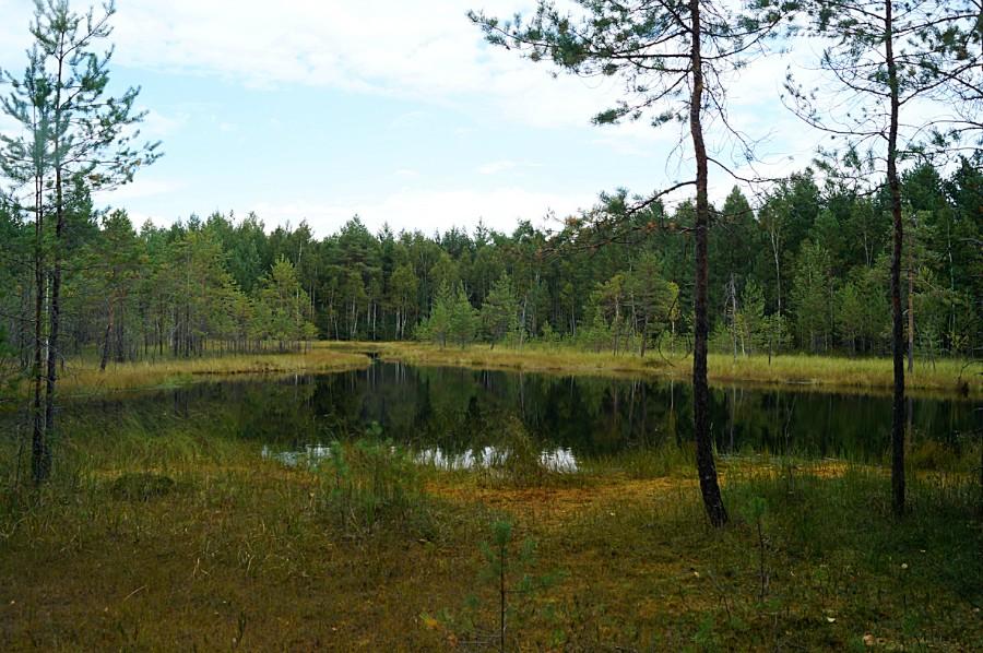 На озере Жуково. Фото с южного берега