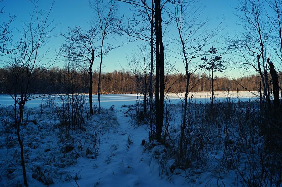 Тропинка к восточному берегу озера Глубокое (Павловский район)